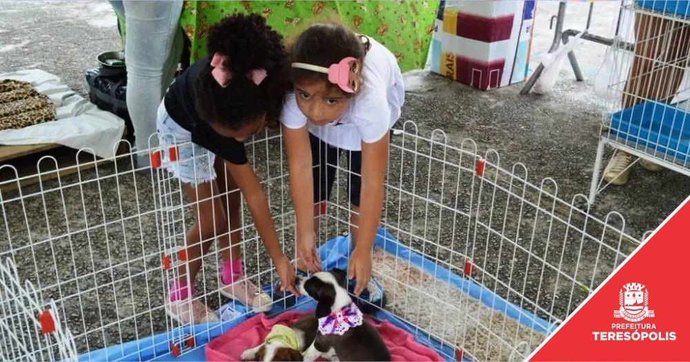 Cães e gatos ganham novo lar na I Feira de Adoção de Teresópolis