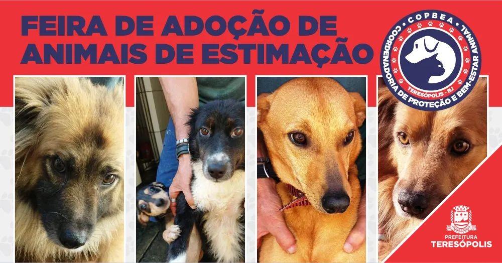 Feira de Adoção de Animais Domésticos acontece neste final de semana em Teresópolis