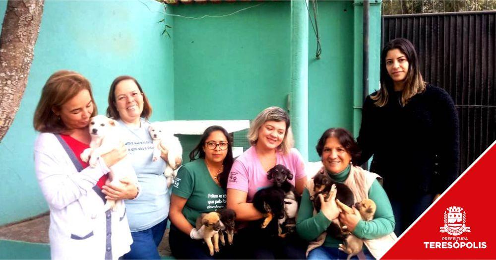 Ação conjunta pela causa animal: COPBEA, canil municipal e protetores se unem para encaminhar filhotes abandonados para feiras de adoção