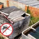 Mosquito não! Todos contra o Aedes aegypti