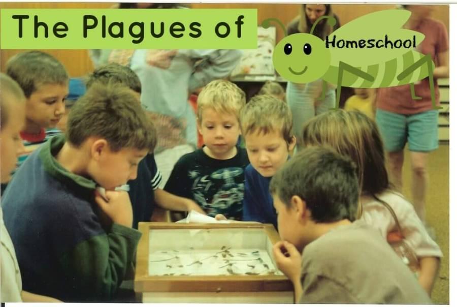 plagues of homeschool