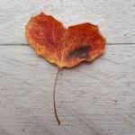 sydan_pienempi
