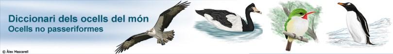 Capçalera_DL_Ocells_No_Passeriformes