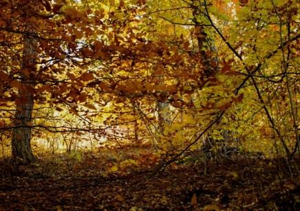 Őszi természetfotók - Bükkalja 1.