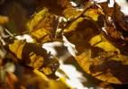 Őszi természetfotók - Medves-fennsík 1.