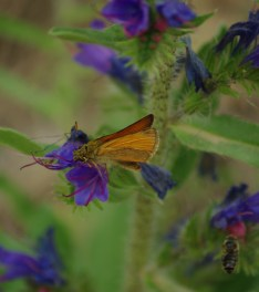 Lepke, virág, méh - Természetfotók a Pilisből
