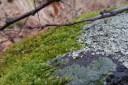 Erdei makró fotó mohával, zuzmóval, sziklával