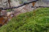 Erdei makró - moha, vízcseppek