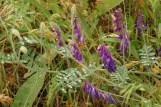 Pillangósvirágúak a Kiskunságban
