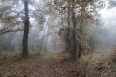 Kerecsendi-erdo-termeszetvedelmi-terulet-8