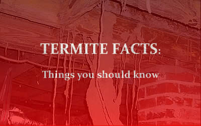 Termite Facts - Things you should know