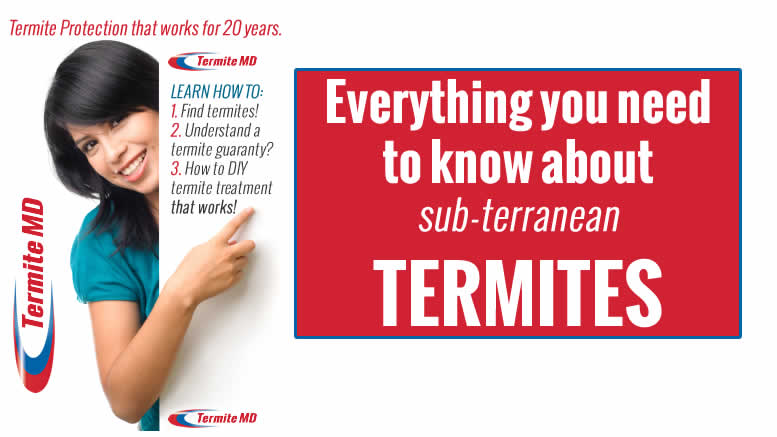 Always Hire the Best Termite Company