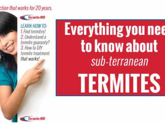 the best termite company
