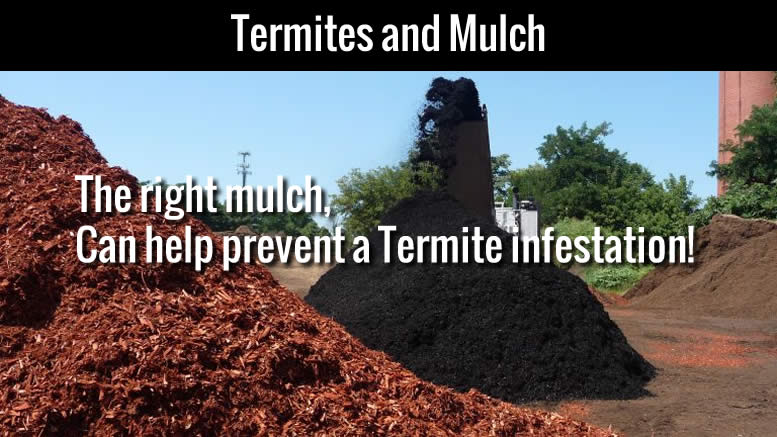 Termites and Mulch-2