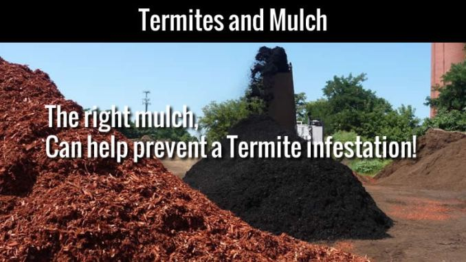 Termites and Mulch