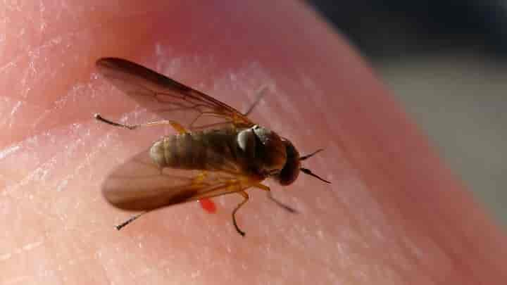 The Safe And Natural Fly Repellent For Humans Termites Blog