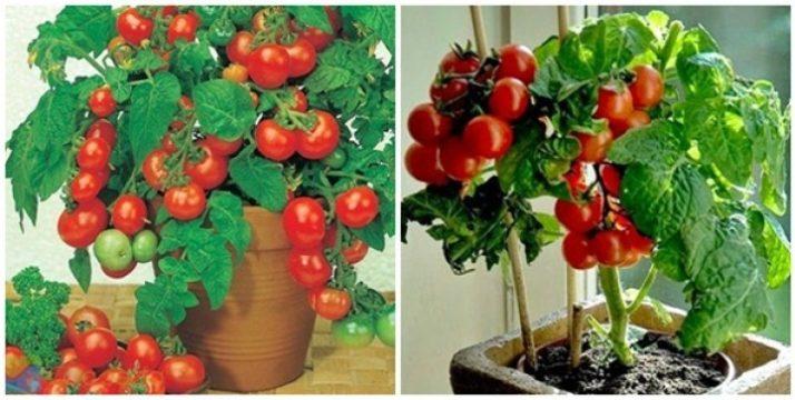 Keuntungan budidaya sayuran