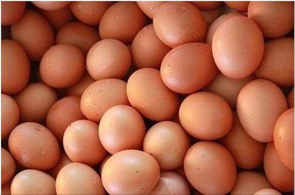 telur ayam broiler
