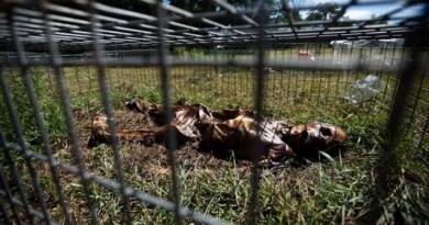 Melihat Proses Peternakan Mayat di Texas