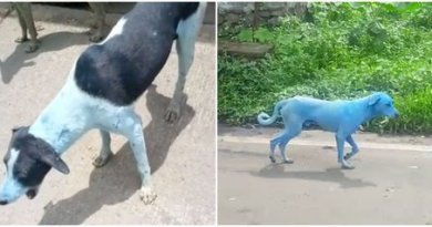 Mengejutkan, Anjing Berwarna Biru ini Ternyata Penyebabnya Ini