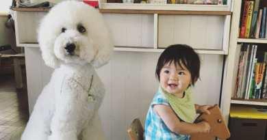 Persahabatan Anjing Pudel Raksasa Dengan Bocah 1 Tahun