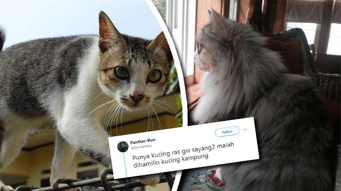 Viral Soal Tweet Kucing Ras Dihamili Kucing Kampung, Netizen: Bukti Cewek Suka Cowok Nakal