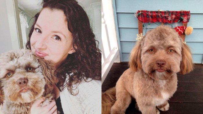 Anjing Memiliki Wajah Mirip Manusia ini, Gegerkan Medsos
