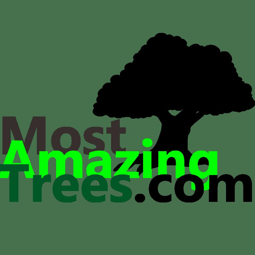 MostAmazingTrees.com