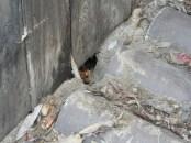 Außen kam unterm gestapeltem Holz das Rattenloch zum Vorschein und führte zum Nachbarn ...