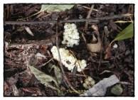 Kennt ihr schon Schneckengelege? Davon gab es im und unterm Holz sehr viele. Do you know clutches of snails? We found them in and under the wood.