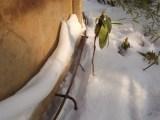 Bevor der Schnee kam, verschweißte er die Bögen miteinander. / Bevor snow came, he connected the bows.