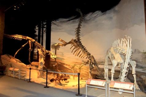Fósseis da Era Mesozoica