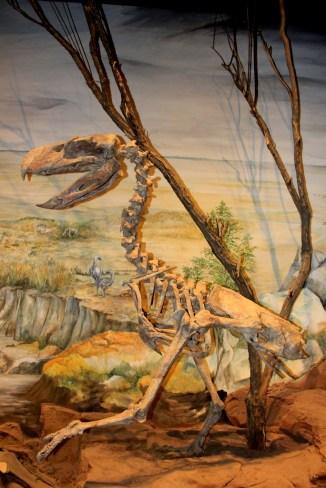 Fororraco, ave de grande tamanho da Era Cenozoica. Viveu entre 30 e 26 milhões de anos atrás