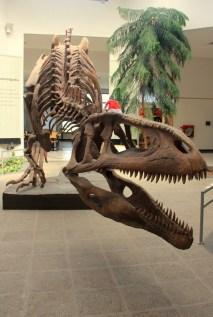 Tyrannotitan, estima-se que media até 14 metros de comprimento e pesava cerca de 7 toneladas