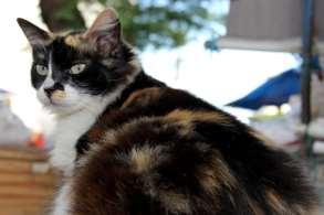Este gatinho adora comer as tapiocas que os visitantes largam pelo caminho