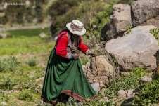 Mesmo com 83 anos de idade, a Dona Maria segue firme e forte no trabalho com as ovelhas