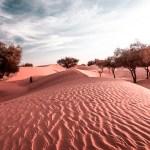 FineArt Mauritania