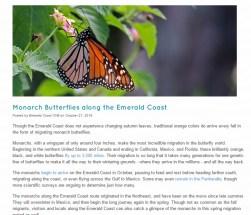 http://www.emeraldcoastfl.com/discover-the-coast/emerald-postings-blog/monarch-butterflies-along-the-emerald-coast/?cat=
