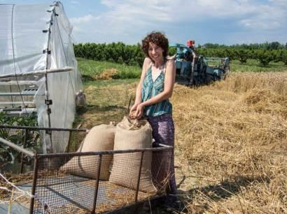 Il primo grano raccolto