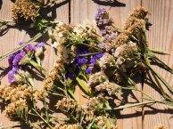 ciona-semi-fiori