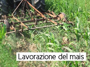 Lavorazione del mais