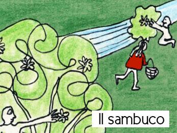 La ricerca del sambuco