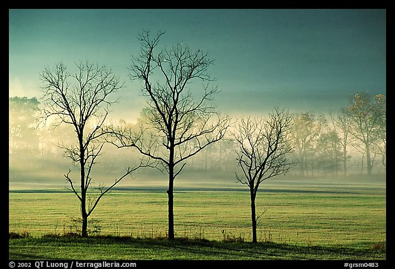 PicturePhoto Three Bare Trees Meadow And Fog Cades