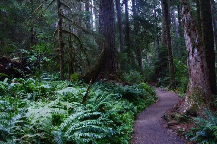 How I Spent A Long Weekend at Olympic National Park