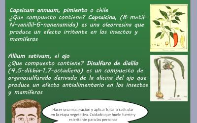 Dr Nabis, ajo y pimiento