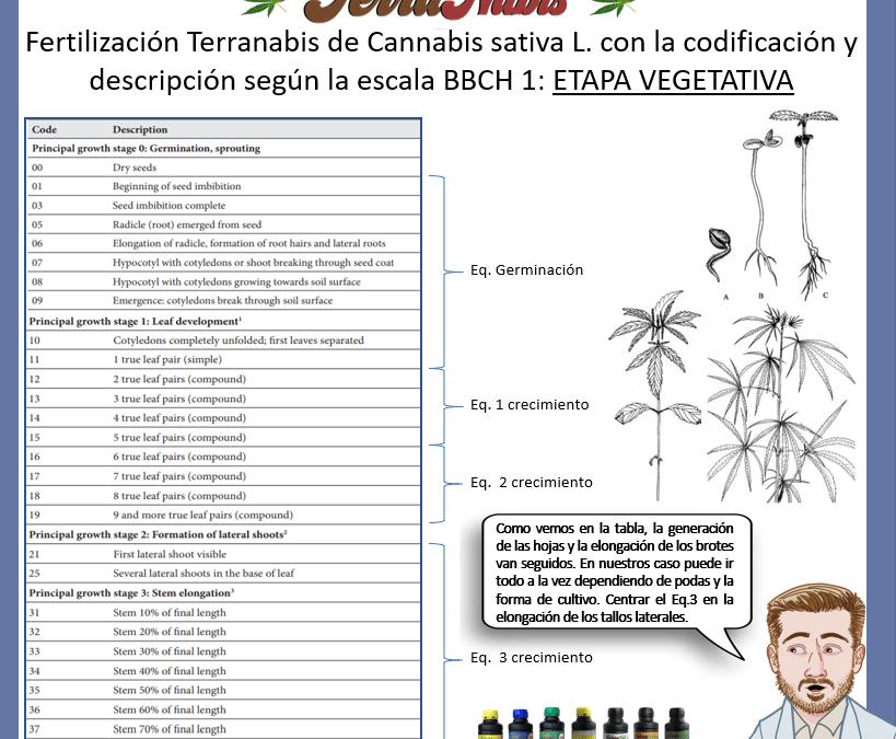 Dr Nabis bbch cannabis 1