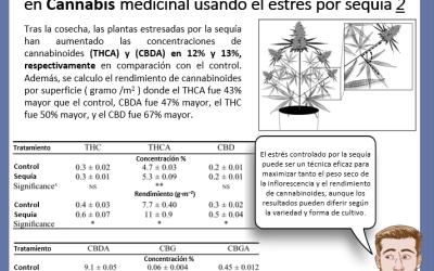 Dr Nabis estrés por sequía para peso y cannabinoides 2