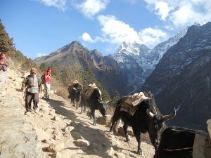 1280px-Yak_Nepal