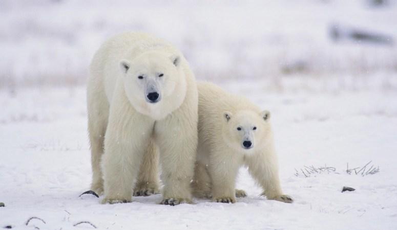 Arctic Adventure Cruise