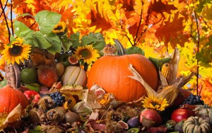 All About Pumpkins & Decorating Tips